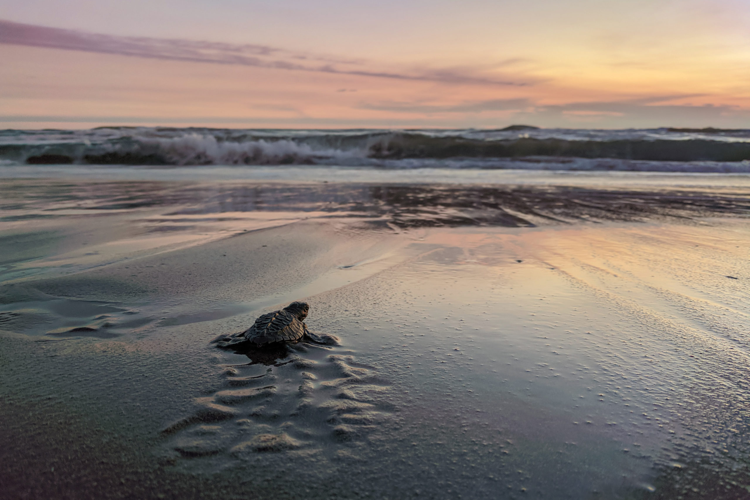 Turtles on a beach (Shutterstock)