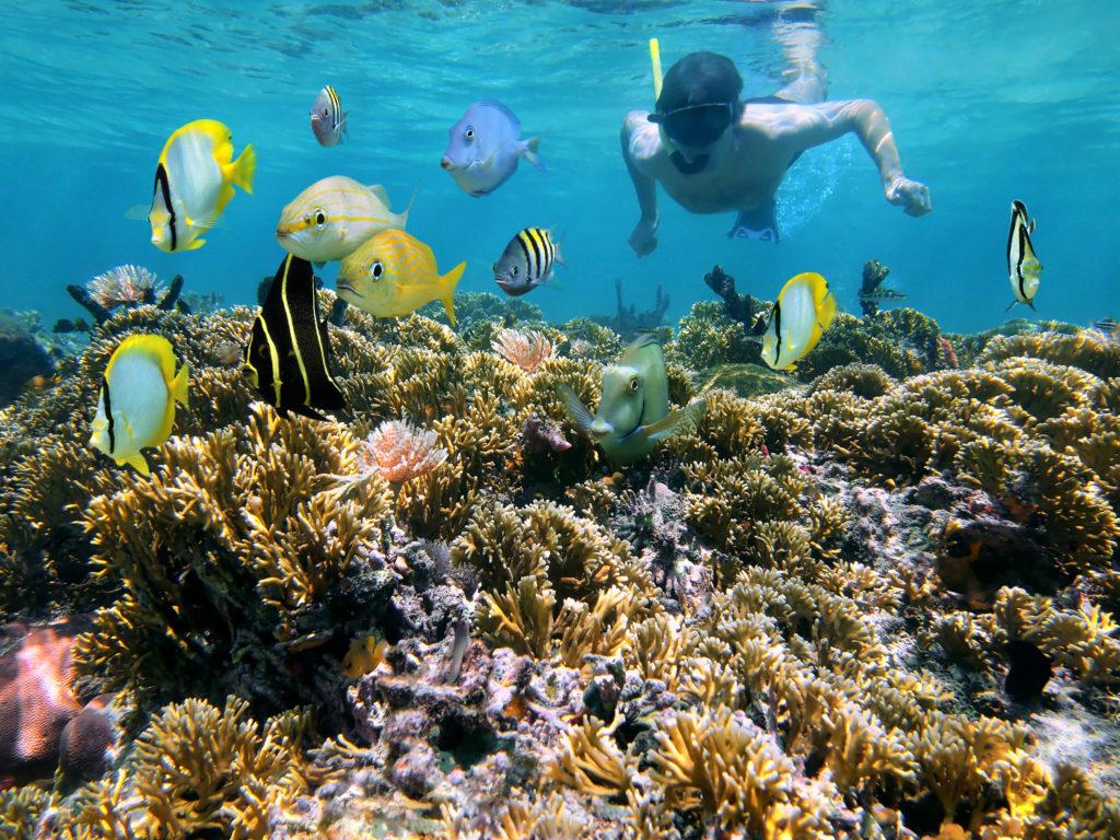 Snorkelling in high definition (Shutterstock)