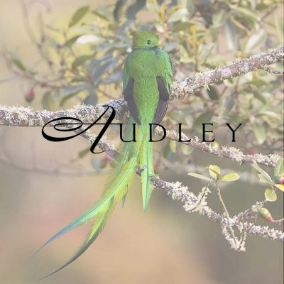 audley-2