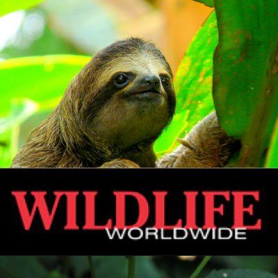 wildlife-worldwide